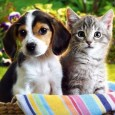 IMPORTING DOGS AND CATS REQUIREMENTS FOR THE IMPORTATION OF DOGS AND CATS INTO THE KINGDOM OF THAILAND  1) A health certificate in English, signed or further endorsed by a full-time […]
